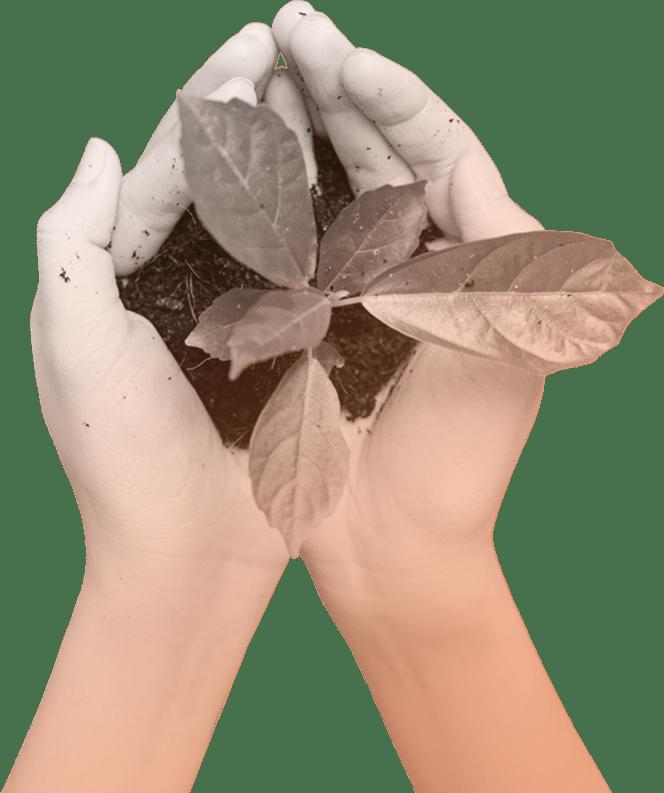 The-One-Tree-Planted-Inquivix